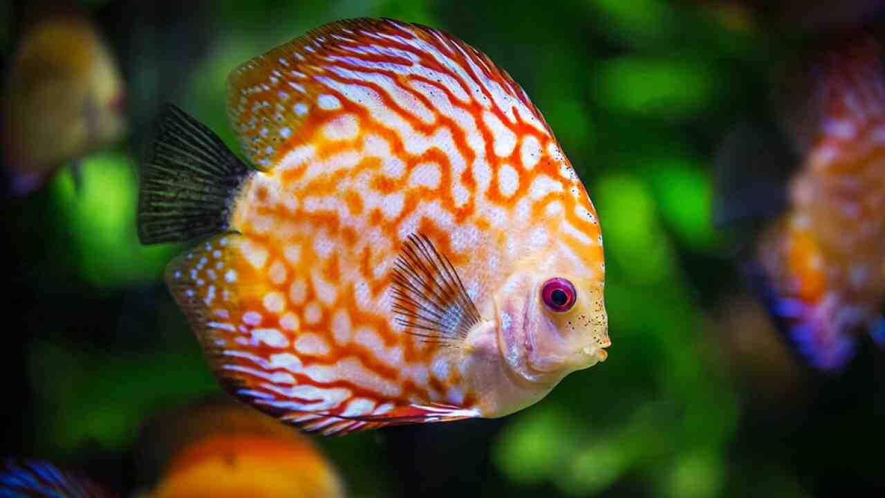 Quand les poissons seront-ils placés dans l'aquarium?