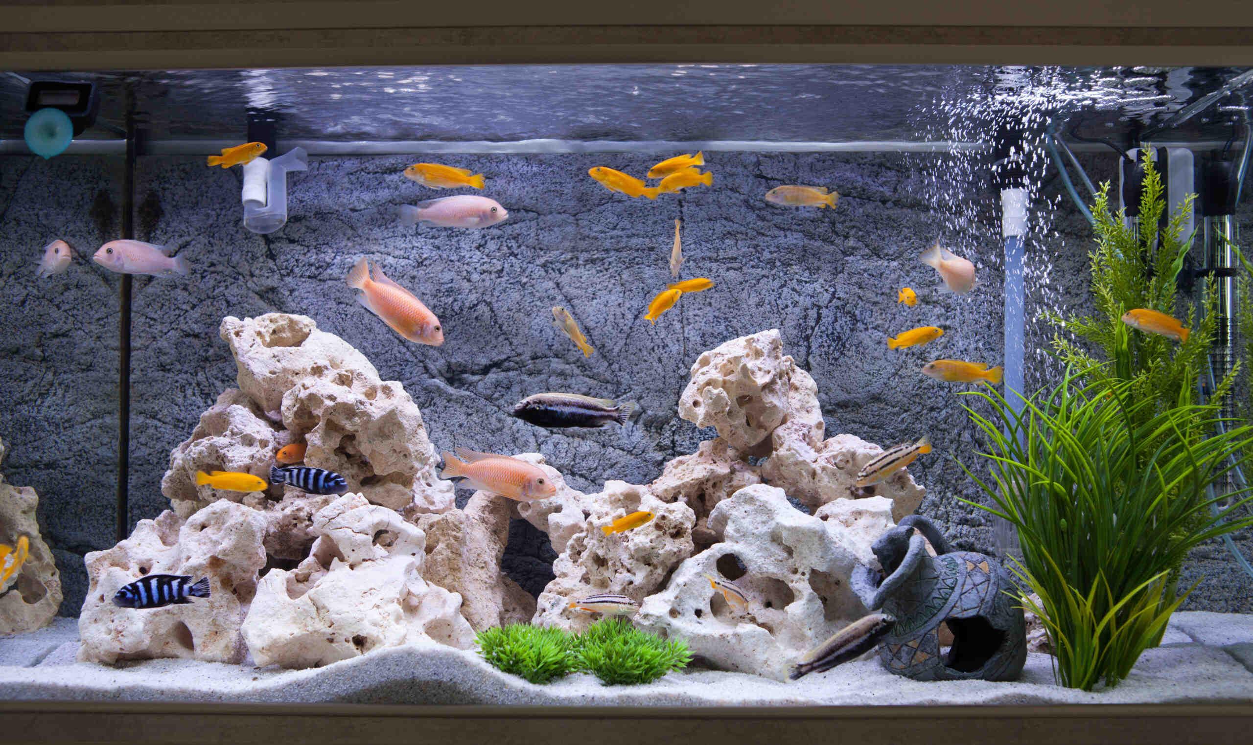 Quand mettre des bactéries dans l'aquarium?