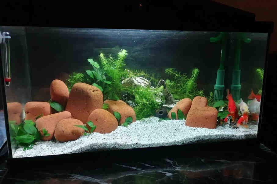 Quand mettre du poisson dans un nouvel aquarium?