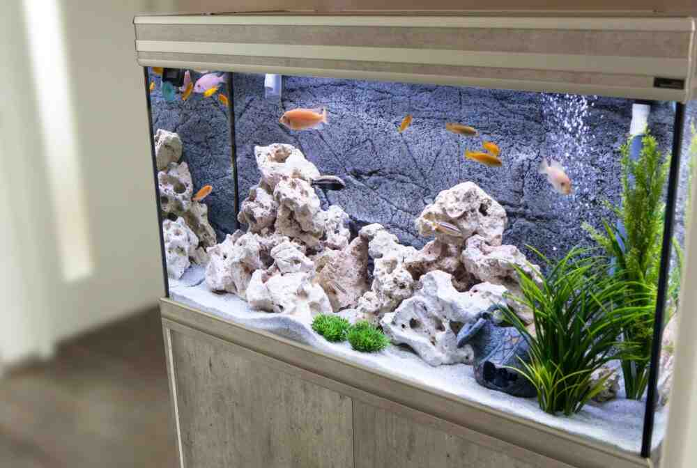Quand mettre les plantes dans l'aquarium ?