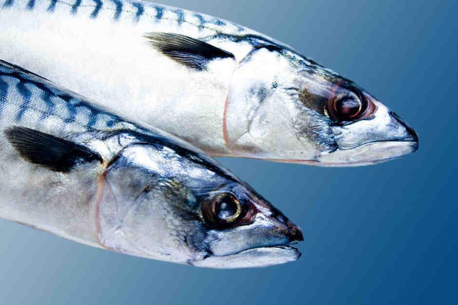 Quel est le meilleur poisson à manger?