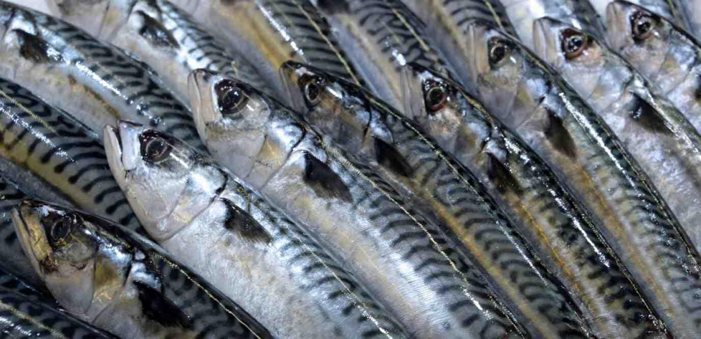 Quel est le meilleur poisson?