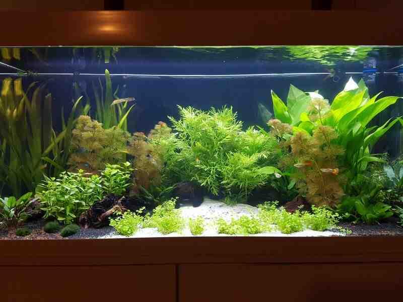 Quel est le meilleur substrat pour les aquariums?