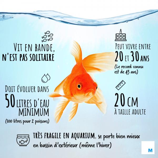 Quel genre de poisson pour un aquarium de 25 litres?