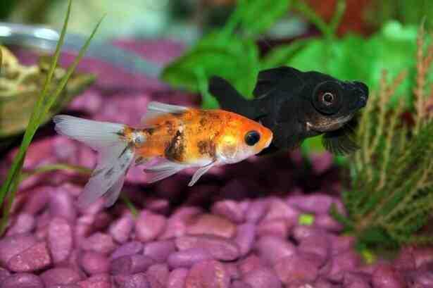 Quel pH pour mon aquarium?