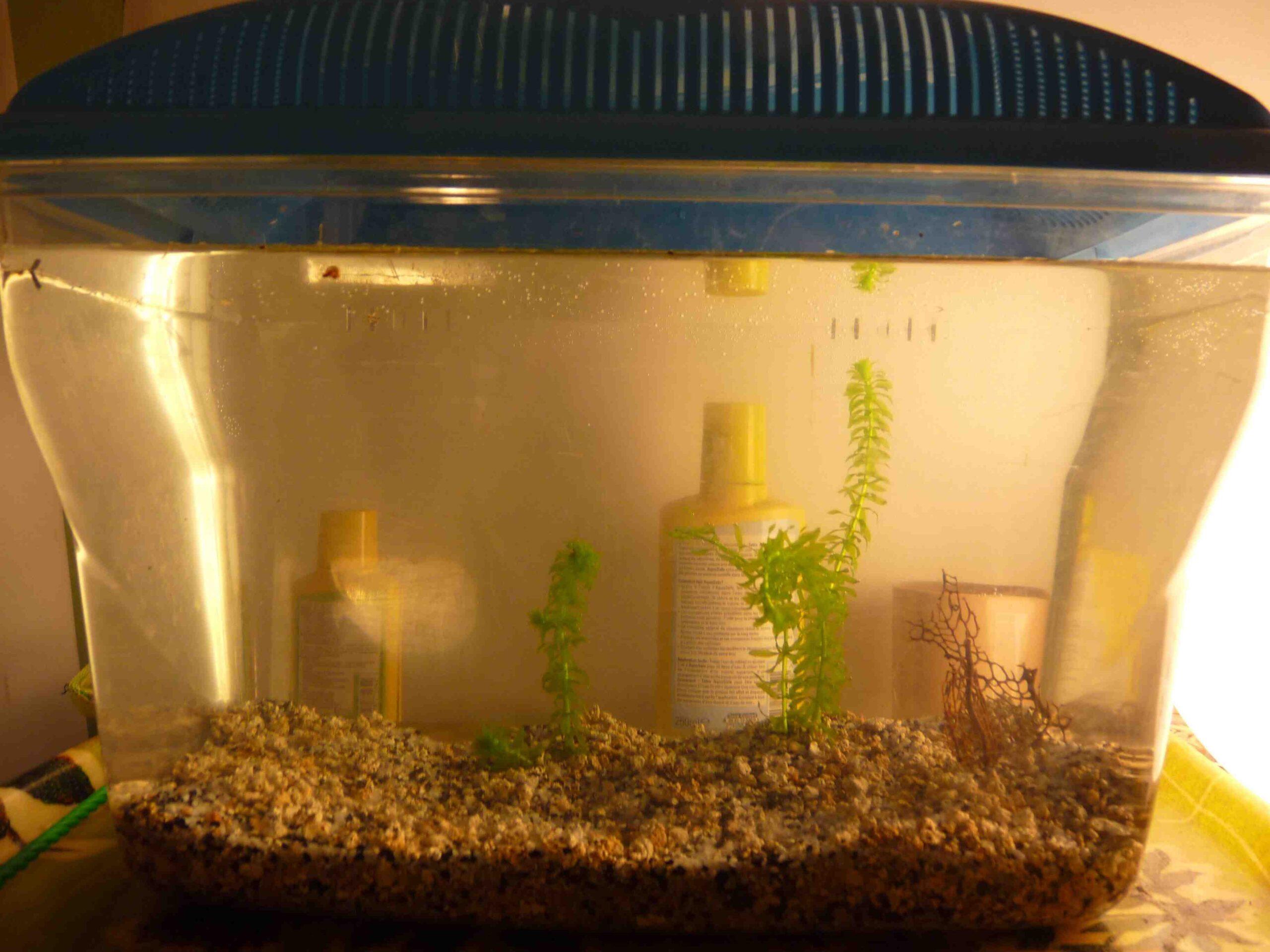 Quel poisson pour l'aquarium de 35l?