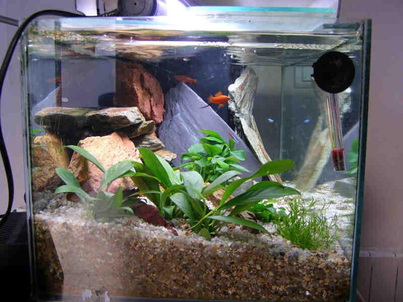 Quel poisson pour un aquarium de 20 litres?