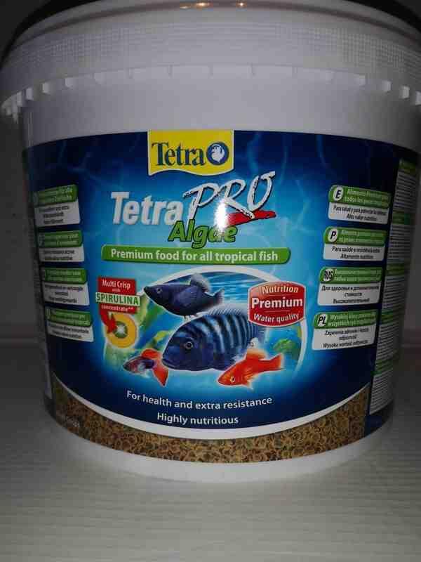 Quel poisson pour un aquarium de 60 litres?
