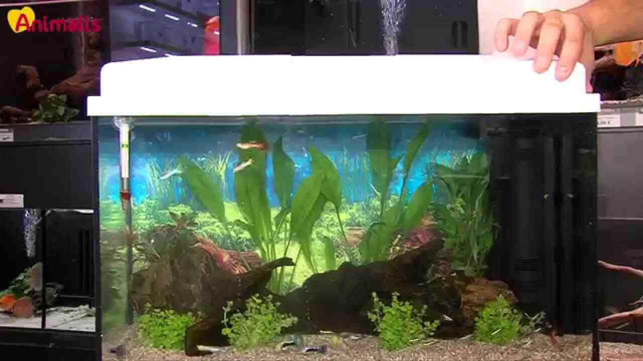 Quel produit pour démarrer un aquarium?