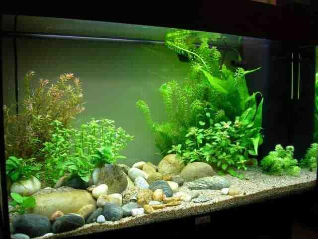Quel substrat pour un nano-aquarium?