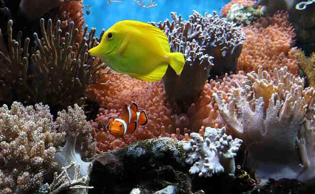 Quelle est la température de l'aquarium d'eau chaude?