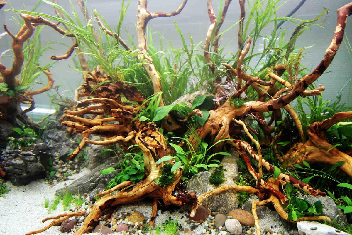 Quelles plantes dans un aquarium?
