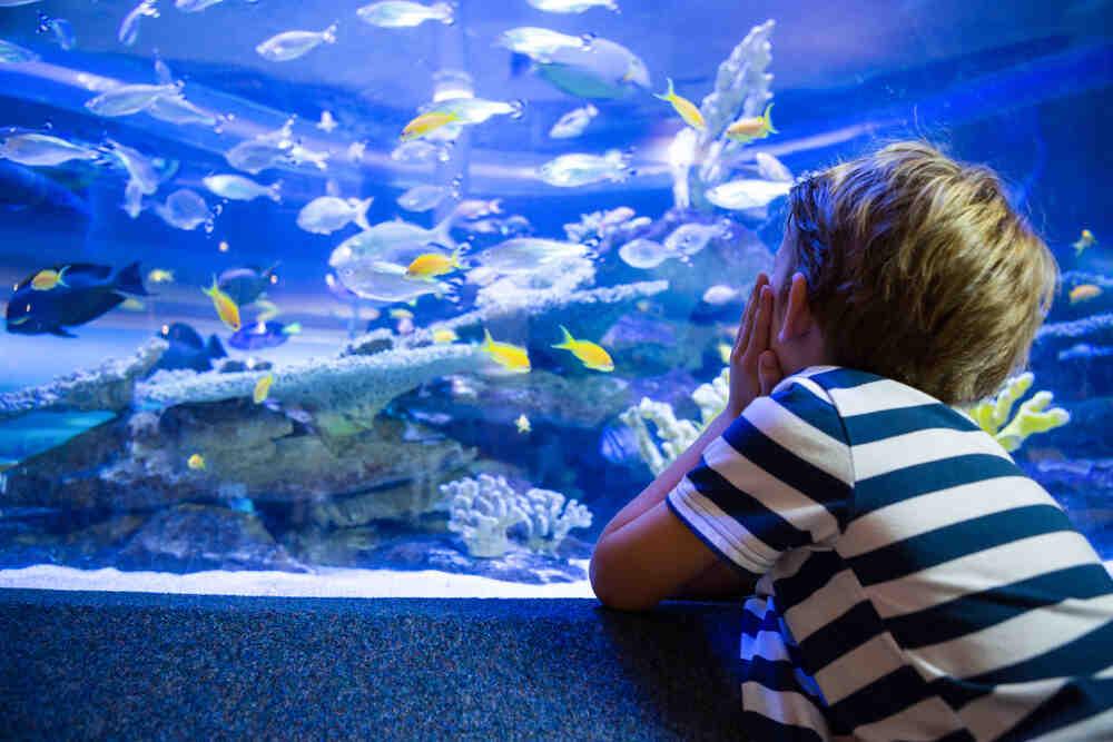 Quels poissons dans un aquarium de 60 litres?