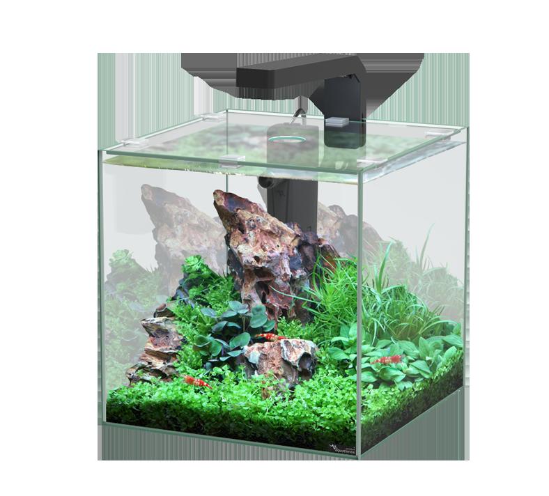 Quels poissons peuvent survivre dans un petit aquarium?