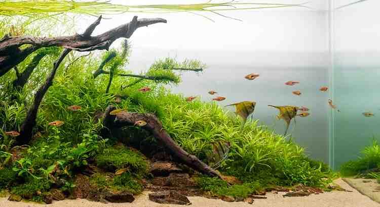 Quels poissons peuvent vivre ensemble dans un aquarium?