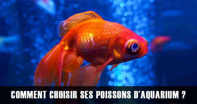 Quels poissons pour aquarium eau froide ?