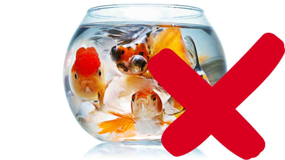 Quels poissons pour un aquarium de 100 litres ?