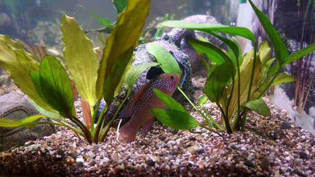 Quels poissons y a-t-il dans le petit aquarium?