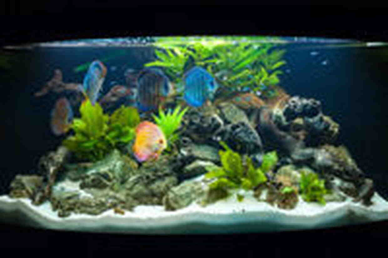 Un aquarium consomme-t-il beaucoup d'électricité?