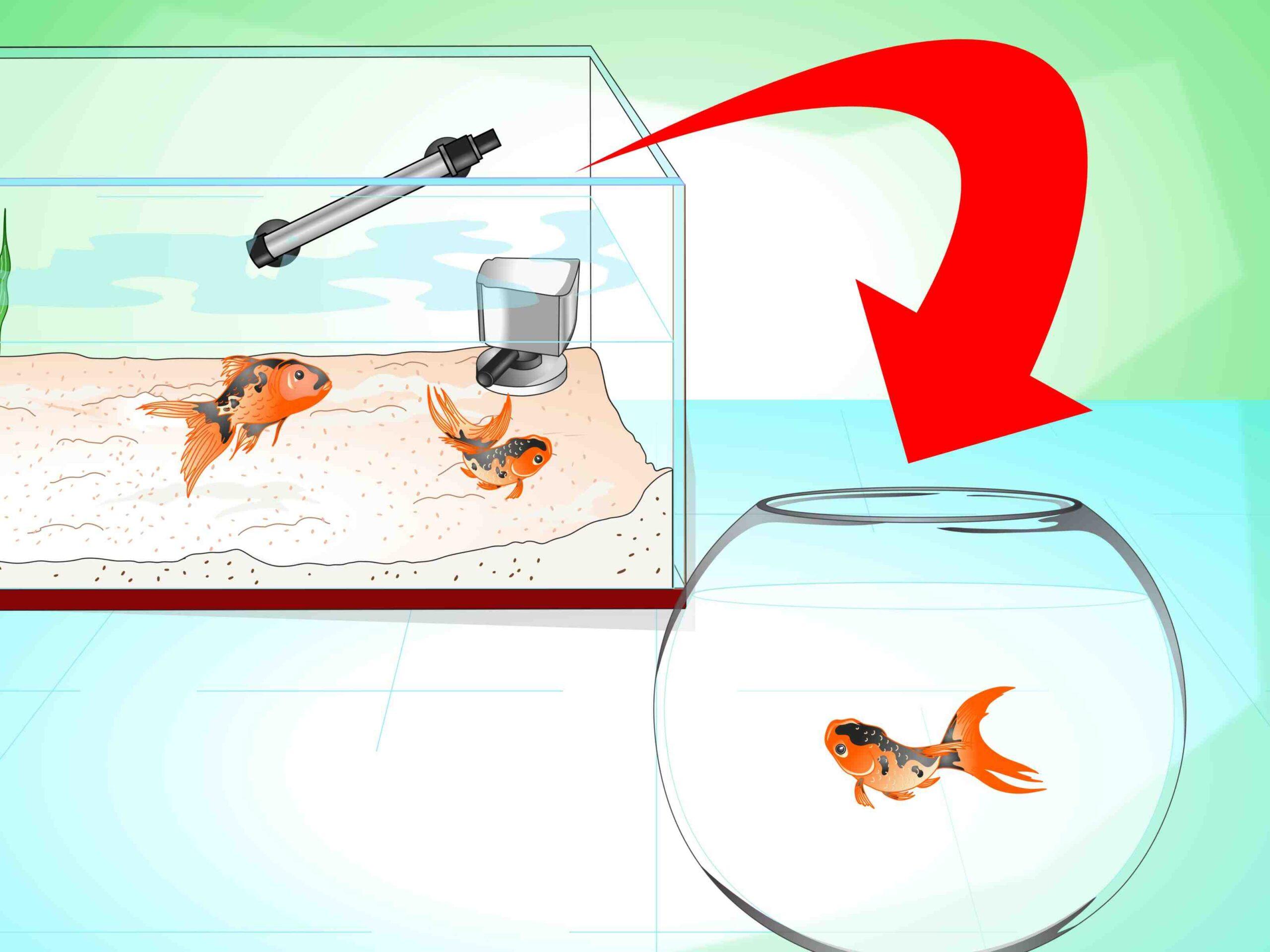 Comment aidez-vous un poisson à respirer?