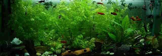 Comment bien entretenir ses plantes d'aquarium ?