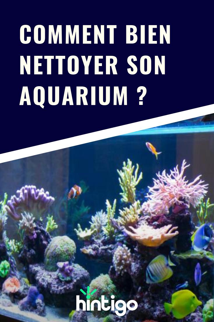 Comment bien gérer son aquarium ?