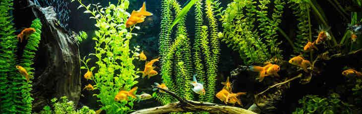 Comment choisir les poissons de son aquarium ?