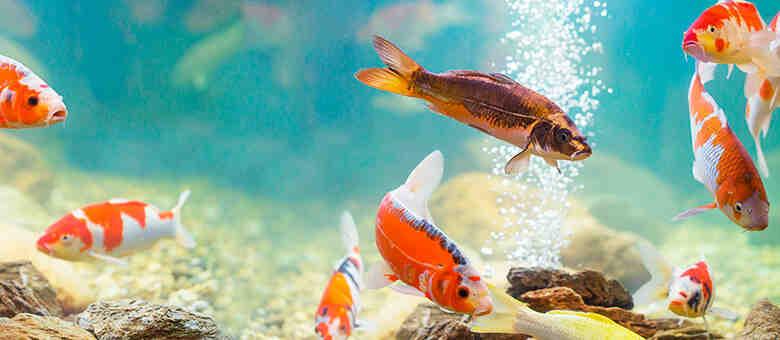 Comment choisir ses poissons d'aquarium ?