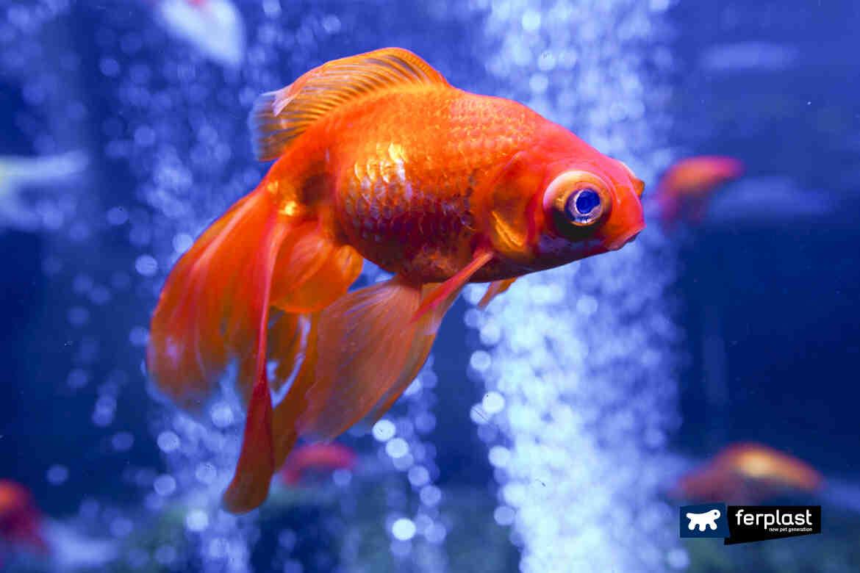 Comment démarrer avec un aquarium?