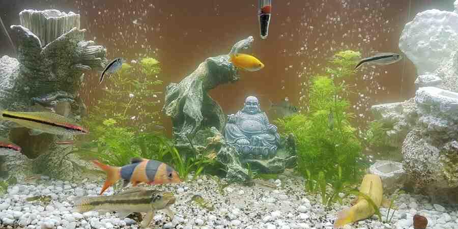 Comment démarrer un bon aquarium?