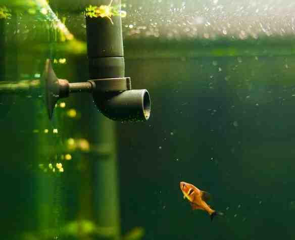 Comment doit être l'eau d'un aquarium ?
