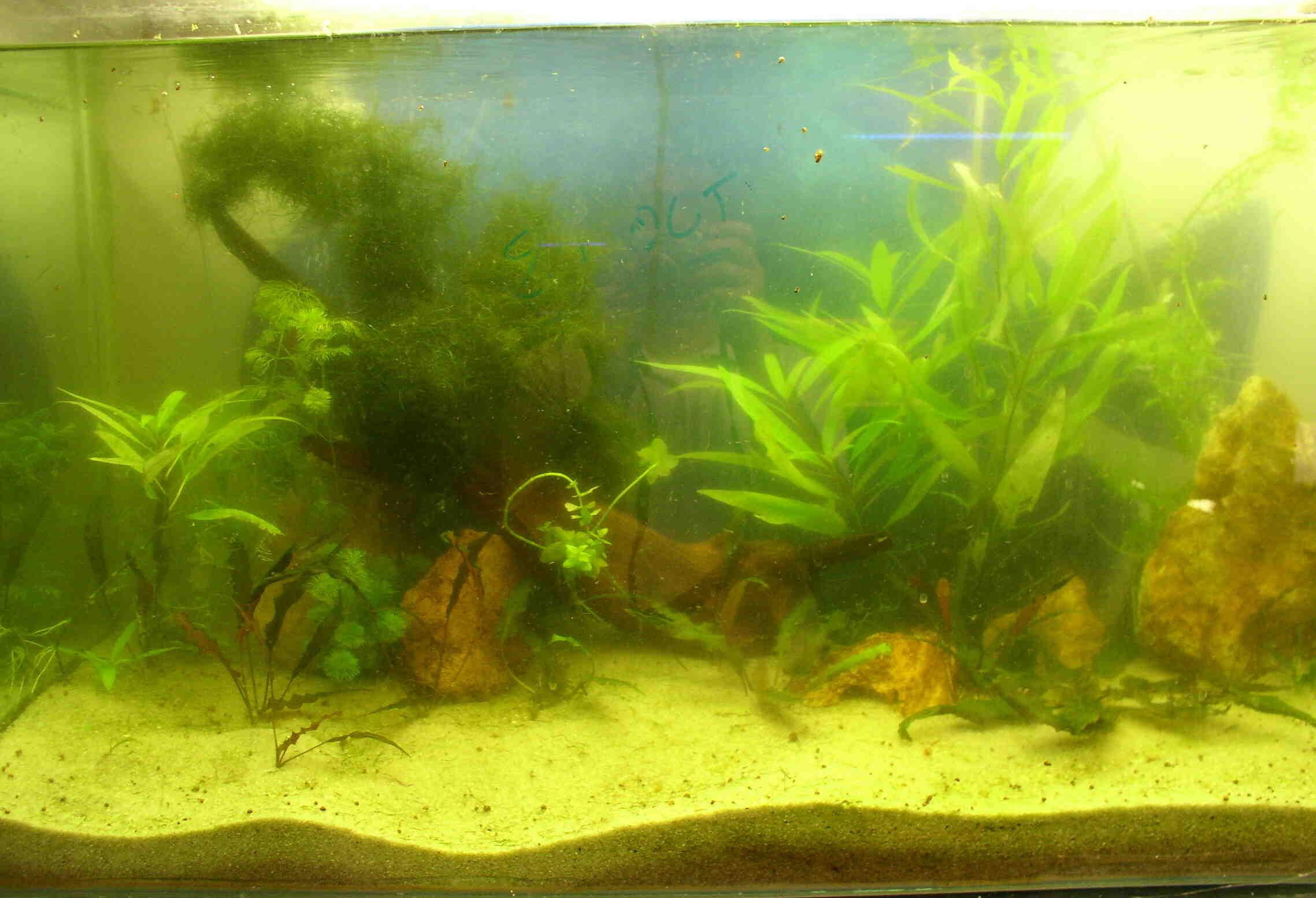 Comment faire accelerer un aquarium ?