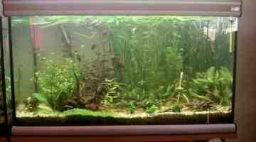 Comment faire baisser le taux de phosphate dans un aquarium ?