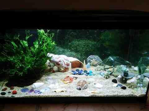 Comment faire son premier aquarium ?