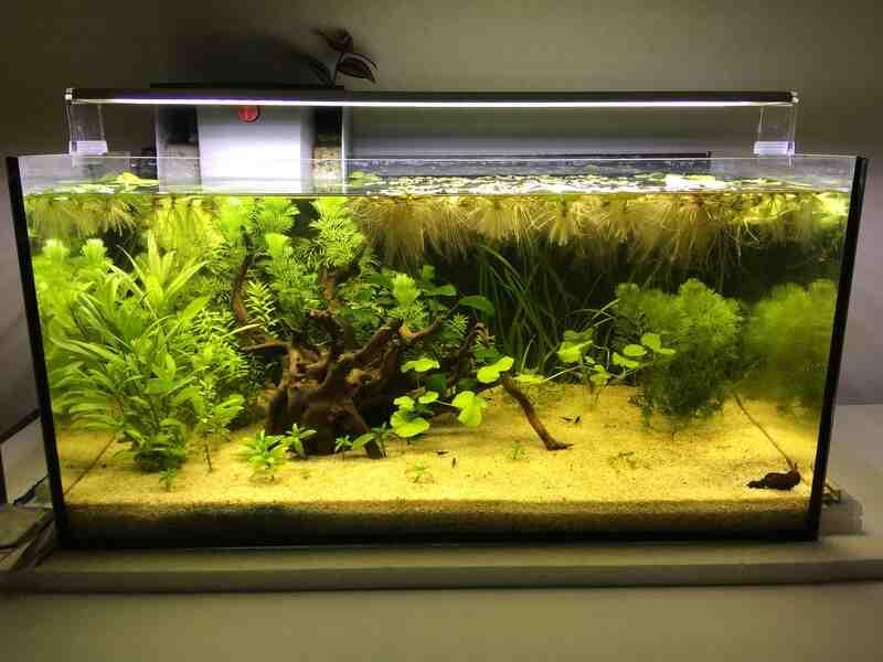 Comment faire un petit aquarium naturel ?