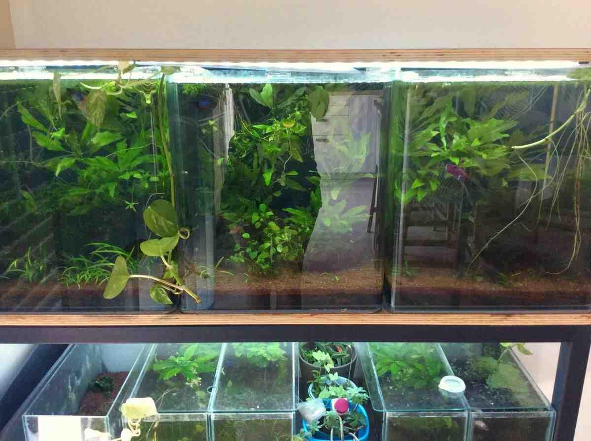 Comment faire un petit aquarium?