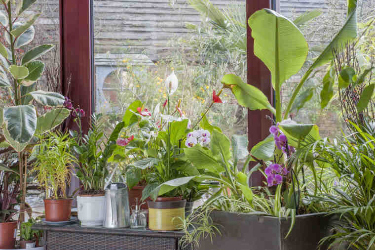 Comment favoriser la croissance des plantes d'aquarium?