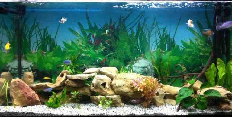 Comment fonctionne une pompe à eau d'aquarium?