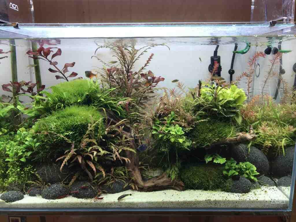 Comment l'eau change-t-elle dans l'aquarium?