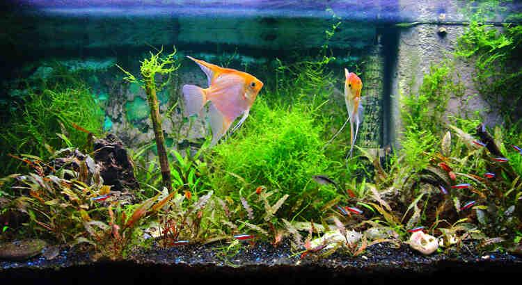 Comment mettre du poisson dans un aquarium?