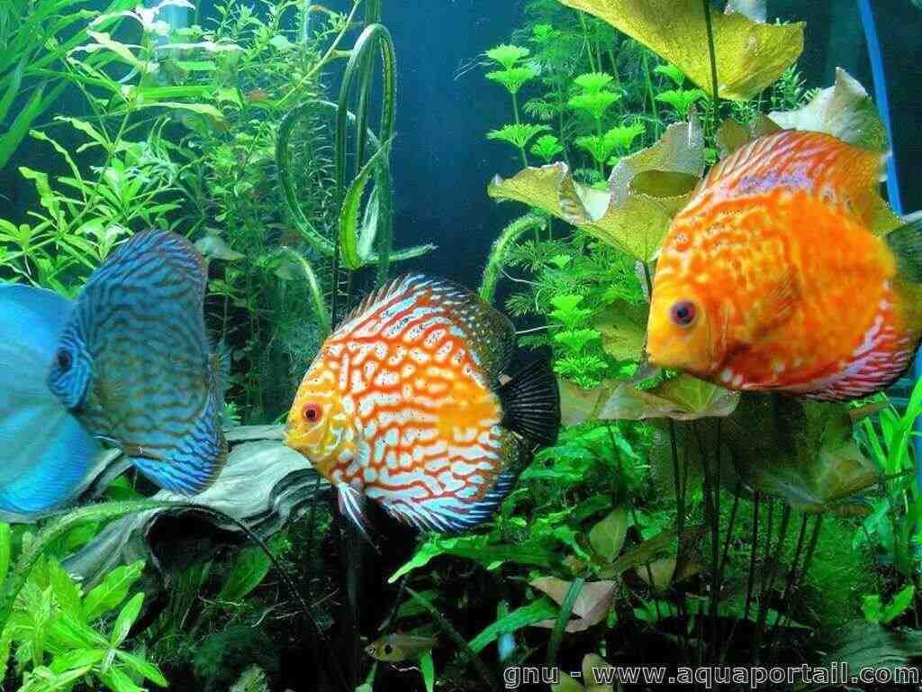 Comment remplir l'aquarium en premier?