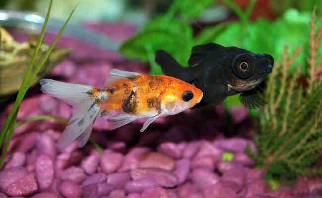 Comment remplir l'aquarium la première fois?