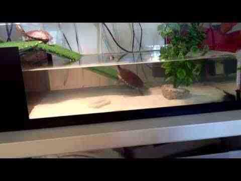 Comment savoir si mon aquarium est prêt?