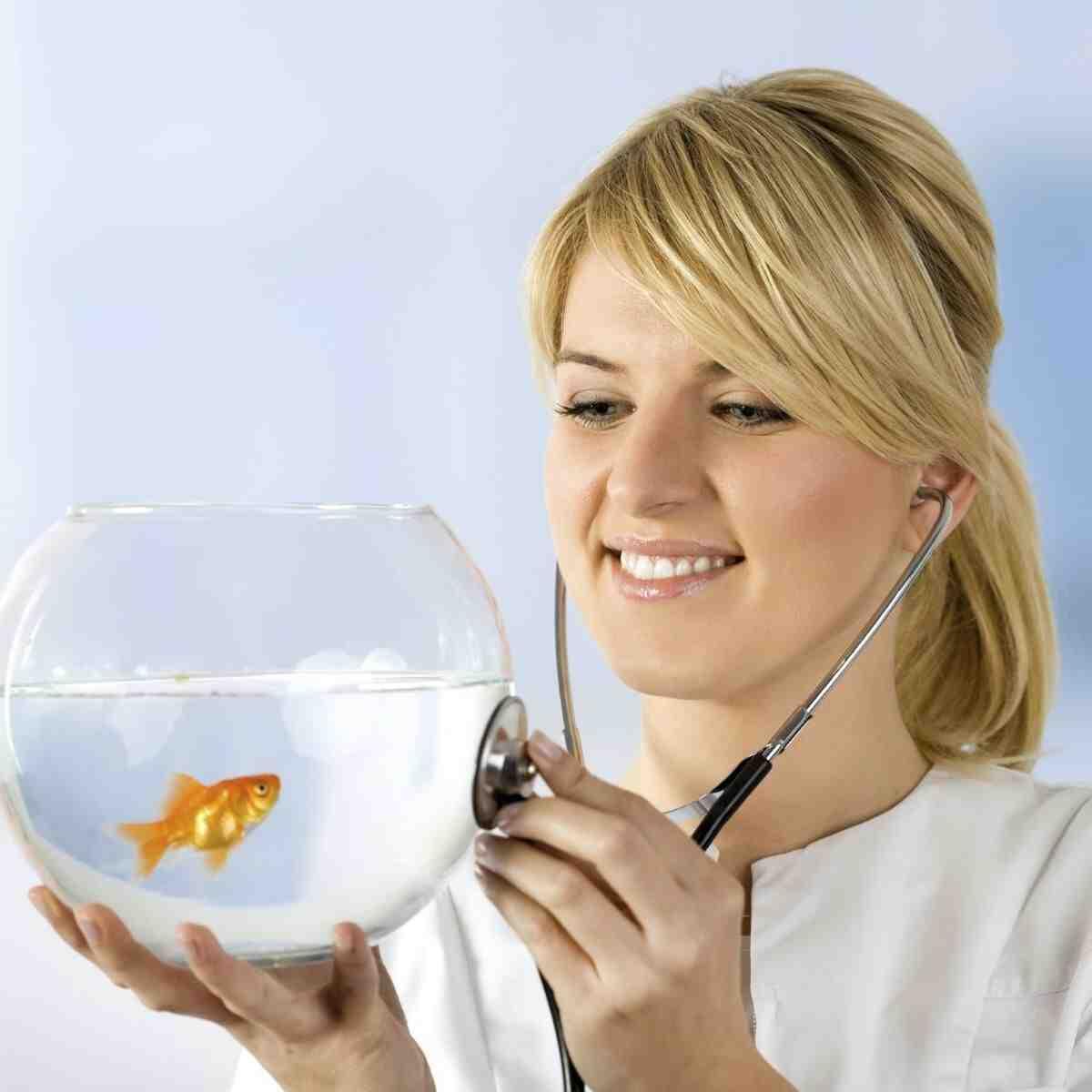 Comment savoir si un poisson est en train de mourir?