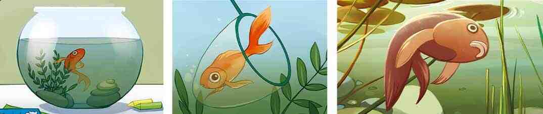Les poissons rouges boivent-ils de l'eau?