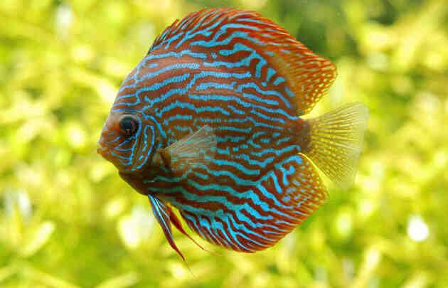 Où acheter un aquarium à Paris ?