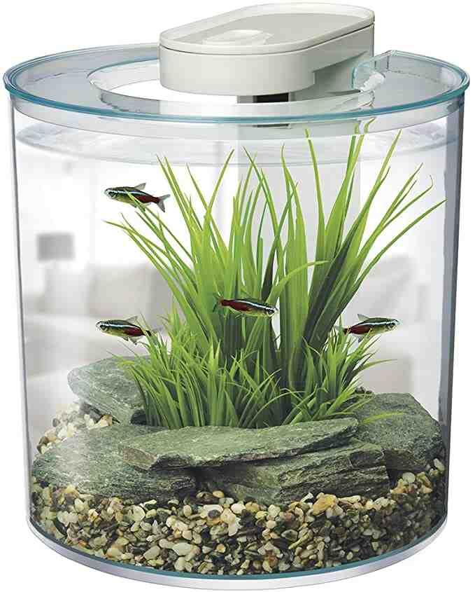 Où acheter un petit aquarium ?
