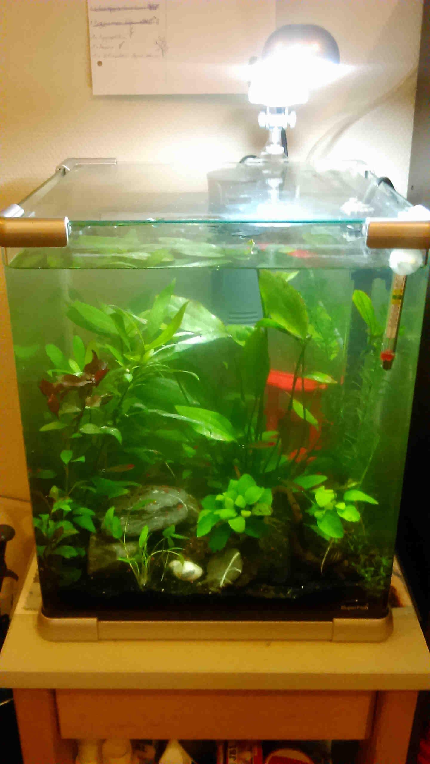 Où pêcher un réservoir d'eau de 20 litres?