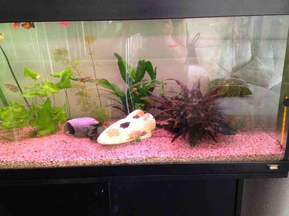 Pourquoi les plantes de mon aquarium meurent ?