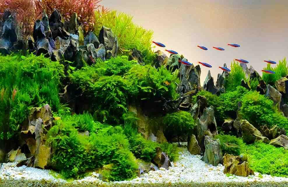 Quand couper une plante d'aquarium?